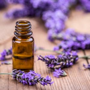 Lavendel-Extrakt Bio